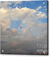6- Rainbow And Seagull Acrylic Print