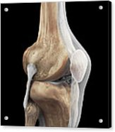 Right Knee Ligaments Acrylic Print