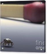 Scale Comparison Of A Tick Acrylic Print