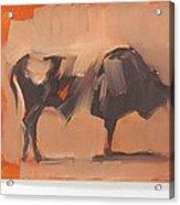 Toro Study Acrylic Print