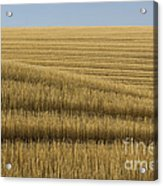 Tracks In Field Acrylic Print