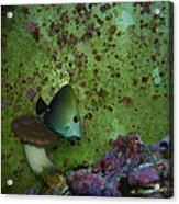 Tropical Fish And Coral Acrylic Print