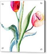 Tulips Flowers  Acrylic Print