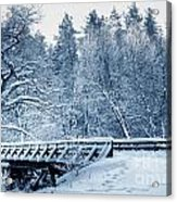 Winter White Forest Acrylic Print