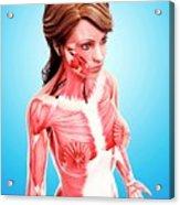 Female Musculature Acrylic Print