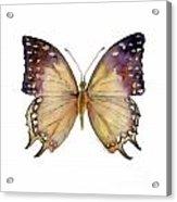 63 Great Nawab Butterfly Acrylic Print