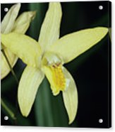 Orchid Flower Acrylic Print