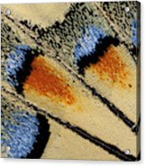 Close-up Detail Wing Pattern Acrylic Print