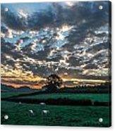 7 A.m. Acrylic Print