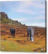 Dartmoor Acrylic Print