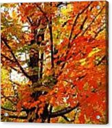 Fall Explosion Of Color Acrylic Print