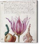Illuminated Manuscript Acrylic Print