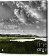 Southern Tall Marsh Grass Acrylic Print