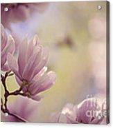 Magnolia Flowers Acrylic Print