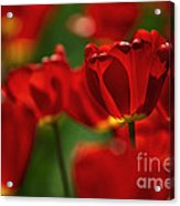 Red And Yellow Tulips Acrylic Print