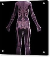 The Skeletal System Female Acrylic Print