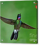 Tourmaline Sunangel Acrylic Print