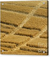 Tracks In Field Acrylic Print