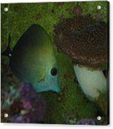 Tropical Fish And Coral Acrylic Print