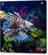 Underwater View Acrylic Print