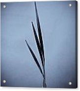 Water Reed Art Acrylic Print