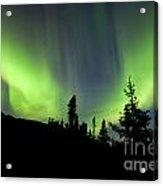 Yukon Taiga Spruce Northern Lights Aurora Borealis Acrylic Print