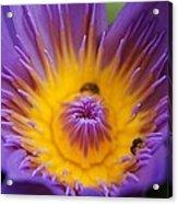 Lotus  Acrylic Print by Gornganogphatchara Kalapun