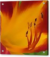 7811 Floral  Acrylic Print