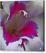 7817 Flower Acrylic Print