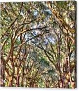 Plantation Allee Of Oaks Acrylic Print