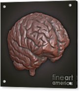 Clay Model Of Brain Acrylic Print