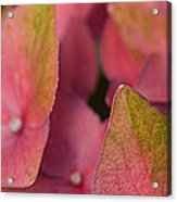 Close-up Of Flowers Acrylic Print