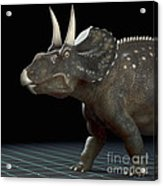 Dinosaur Diceratops Acrylic Print