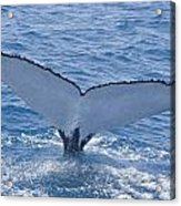 Humpback Whales Acrylic Print
