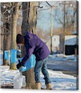 Maple Syrup Production Acrylic Print
