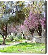 Olympia Greece Acrylic Print
