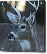 8 Point Buck With Sunset Acrylic Print