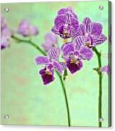 Purple Orchid-11 Acrylic Print