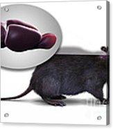 Rat Brain Anatomy Acrylic Print