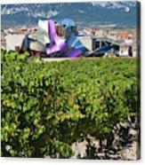 Spain, Basque Country Region, La Rioja Acrylic Print