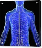 The Nervous System Acrylic Print