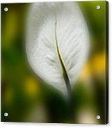 Untitled Flowers Acrylic Print
