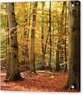 Vibrant Autumn Fall Forest Landscape Image Acrylic Print