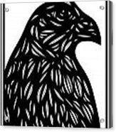 Bruh Eagle Hawk Black And White Acrylic Print