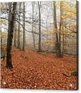 In The Autumn Forest Acrylic Print