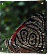 88 Butterfly Acrylic Print