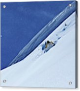 A Athletic Skier Rips Fresh Deep Powder Acrylic Print