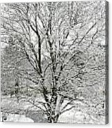 A Wintery View Along Conifer Drive In Burnt Hills Acrylic Print