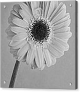 Black And White Beauty Acrylic Print