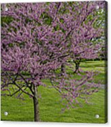 Forest Akers - Blooming Acrylic Print